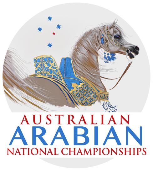 Australian arabians light s550