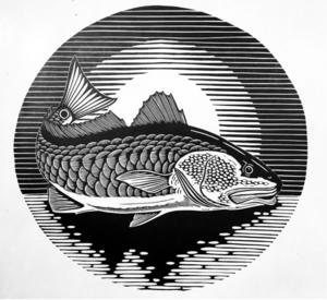 Redfish sunset 15 x 15 s300